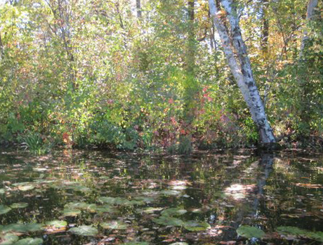 Monet-like reflections at the LadySlipper Inn B&B