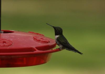 Hummingbird - The LadySlipper Inn B&B