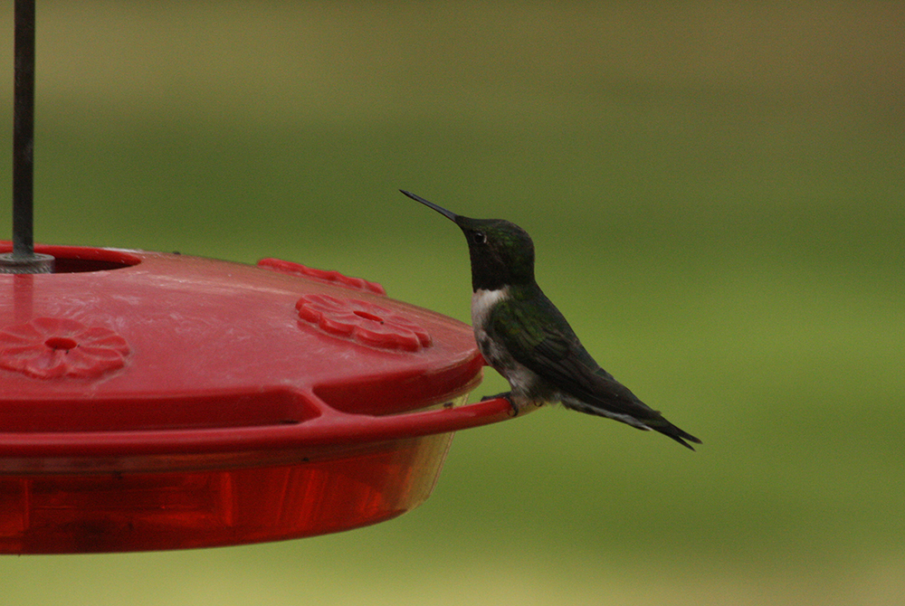 Hummingbird - bed and breakfast mn