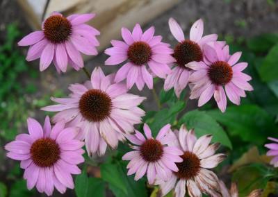 Flowers - The LadySlipper Inn B&B